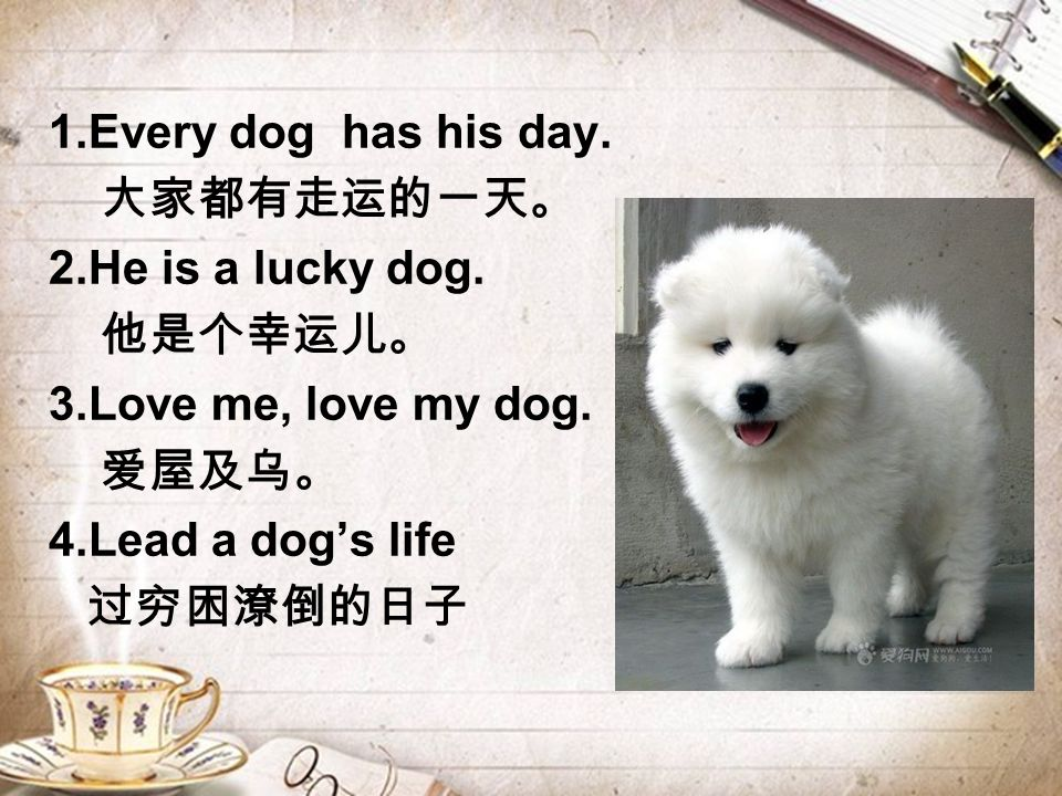 1.Every dog has his day. 大家都有走运的一天。 2.He is a lucky dog.