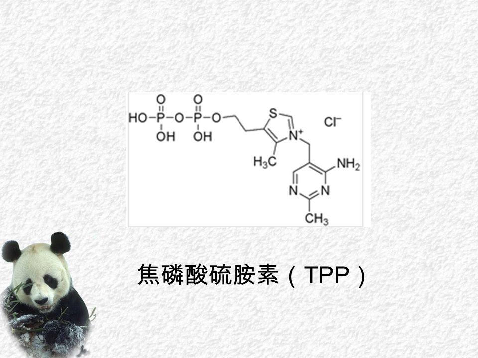 焦磷酸硫胺素( TPP )