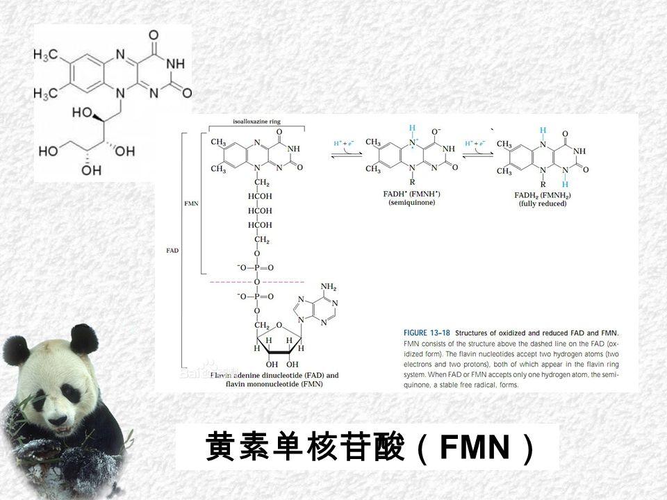 黄素单核苷酸( FMN )