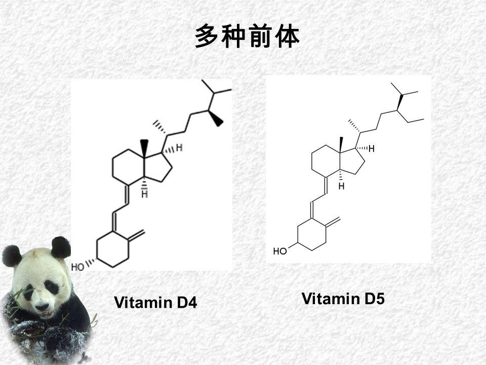 Vitamin D4 Vitamin D5