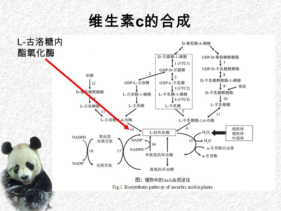 维生素 c 的合成 L- 古洛糖内 酯氧化酶