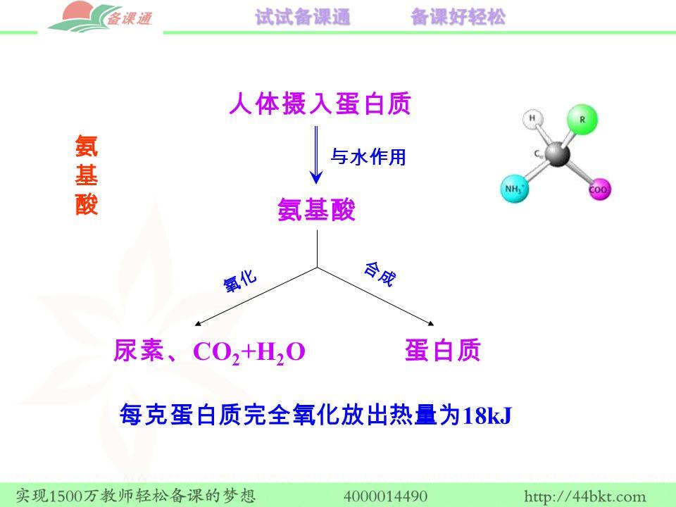 蛋白质 人体摄入蛋白质 氨基酸 尿素、 CO 2 +H 2 O 与水作用 氧化 合成 每克蛋白质完全氧化放出热量为 18kJ 氨基酸氨基酸