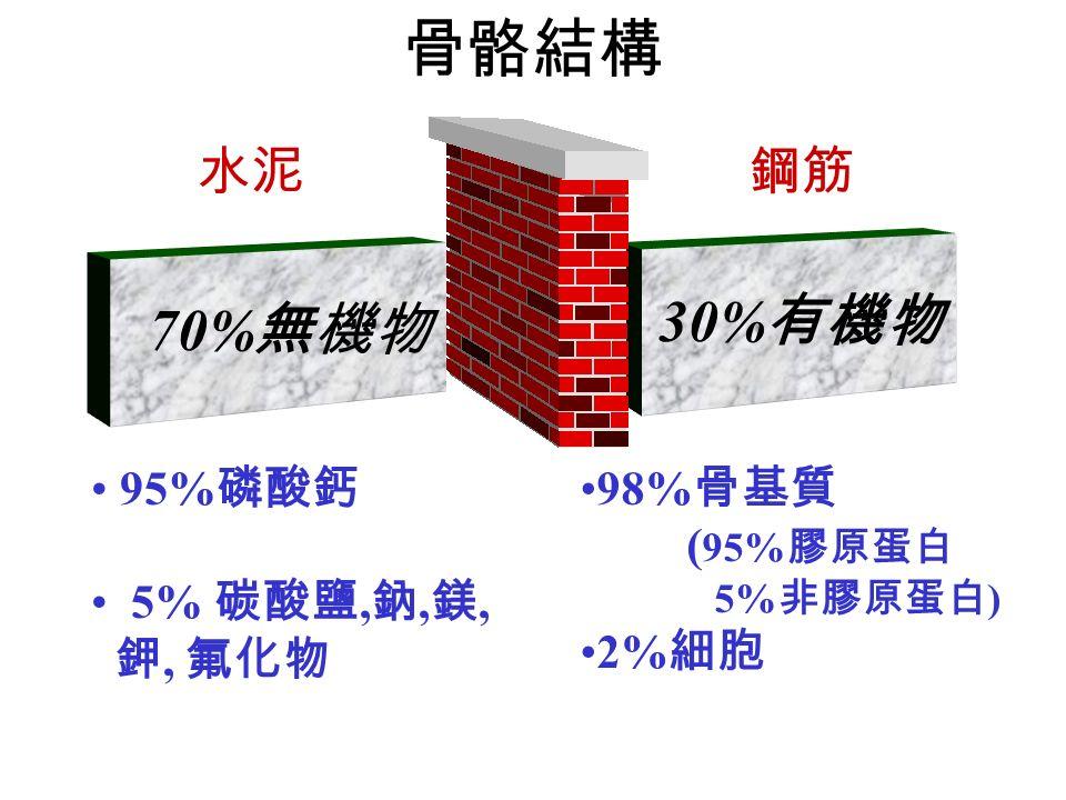 70% 無機物 95% 磷酸鈣 5% 碳酸鹽, 鈉, 鎂, 鉀, 氟化物 水泥 骨骼結構 30% 有機物 98% 骨基質 ( 95% 膠原蛋白 5% 非膠原蛋白 ) 2% 細胞 鋼筋