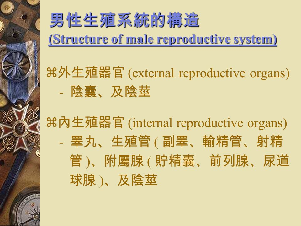 人類的有性生殖 (Sexual reproduction in Human) 男性的生殖作用  男性的生殖作用