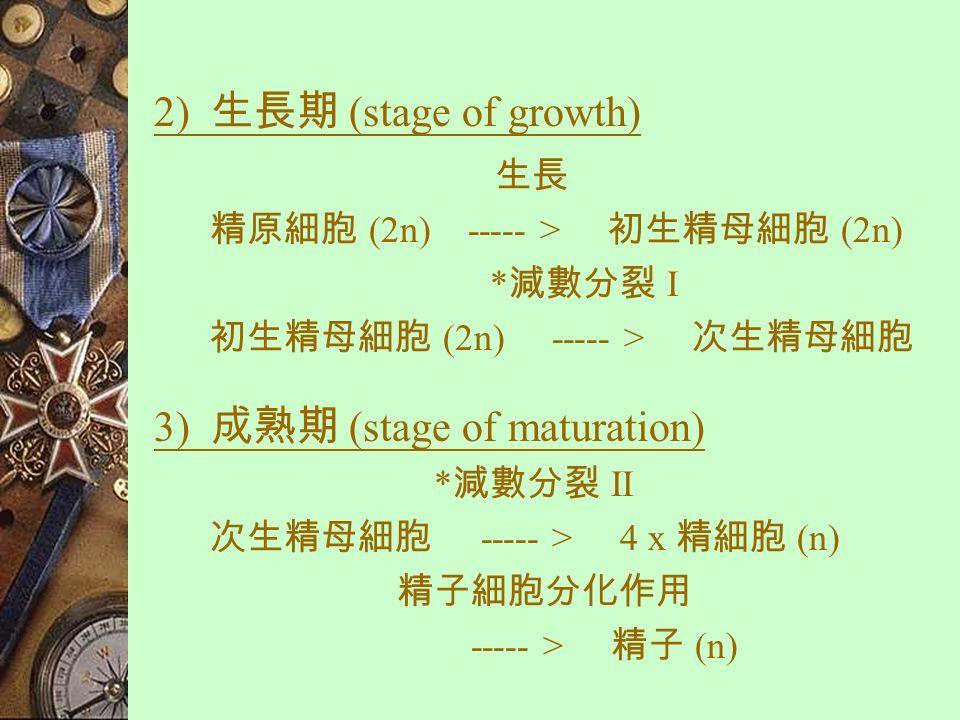 精子形成的階段 (Stages of spermatogenesis)  可分為以下 3 個階段 : 1) 倍增期 (multiplication phase) 有絲分裂 生殖上皮細胞 (2n) ----- > 精原細胞 (2n)