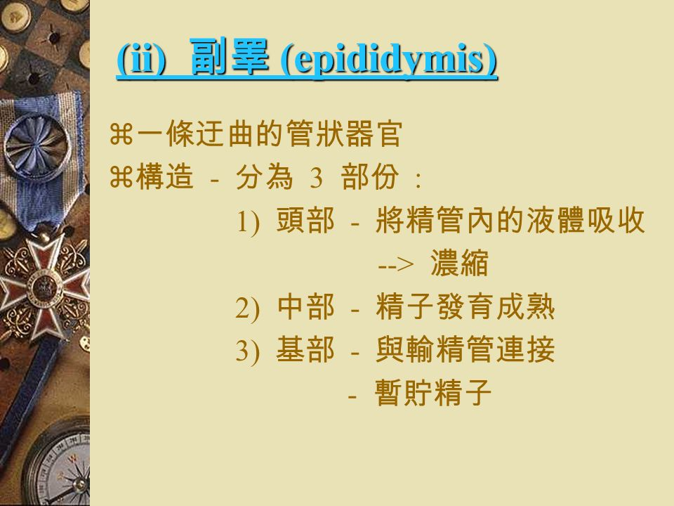 (5) 尾段 (endpiece)  尾部最後的區域  結構最簡單 ( 只有主軸、及細胞質 )