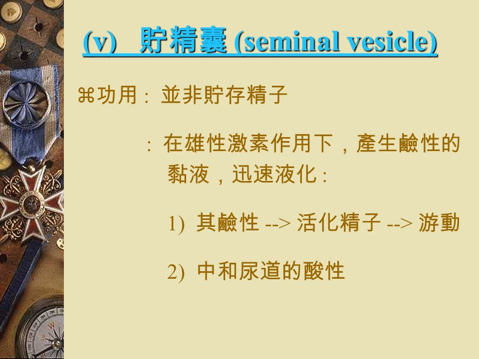 (v) 貯精囊 (seminal vesicle)  開口於短管  與輸精管直接形 成射精管  是一分泌腺