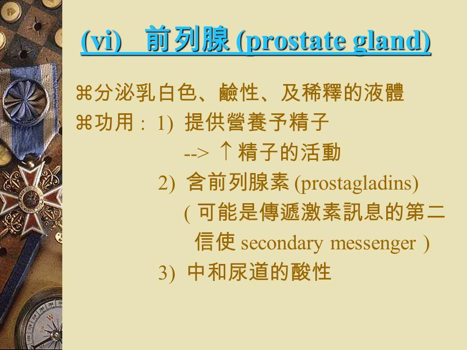3) 液化作用 --> 精液變稀 --> 以便精子游動 4) 黏稠性 --> 在精子表面形成膠質薄膜 --> 使精子的運動不被陰道酸 性的分泌物 