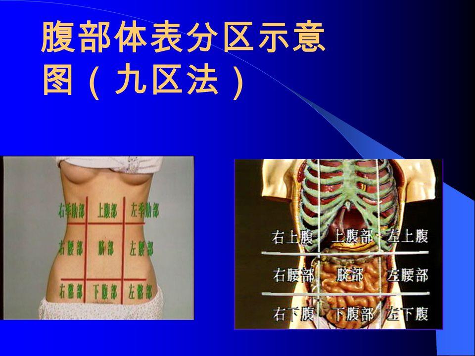 腹部体表分区示意 图(九区法)