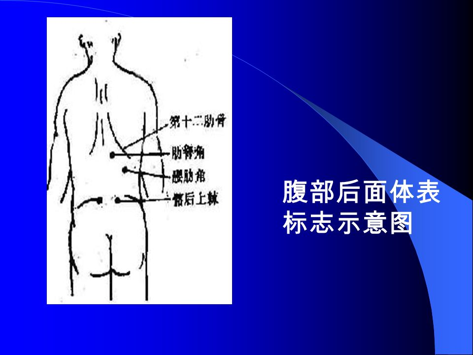 腹部后面体表 标志示意图