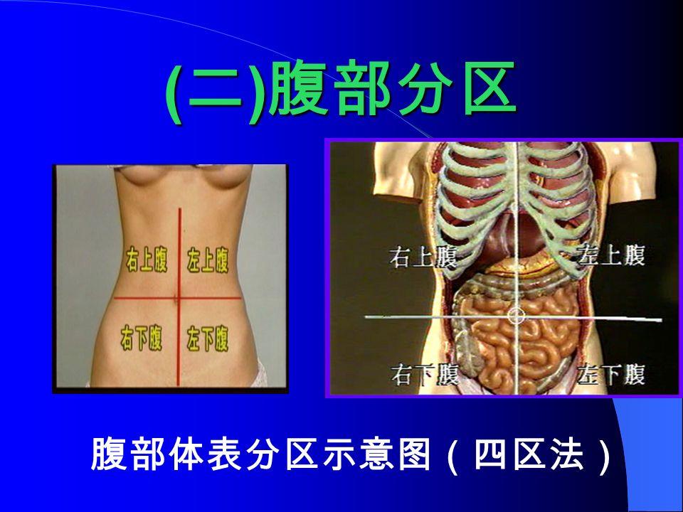 ( 二 ) 腹部分区 腹部体表分区示意图(四区法)