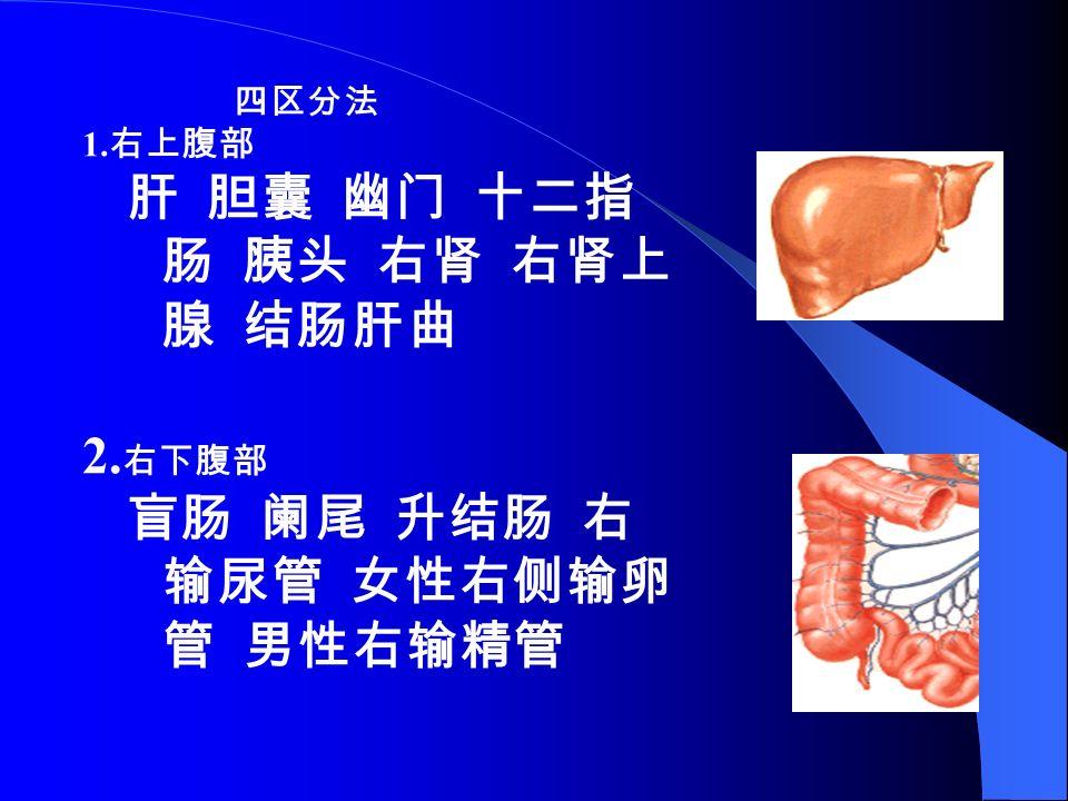 四区分法 1. 右上腹部 肝 胆囊 幽门 十二指 肠 胰头 右肾 右肾上 腺 结肠肝曲 2. 右下腹部 盲肠 阑尾 升结肠 右 输尿管 女性右侧输卵 管 男性右输精管