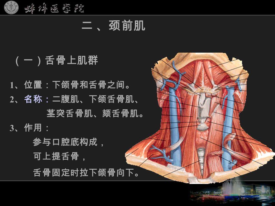 1 、位置:下颌骨和舌骨之间。 2 、名称:二腹肌、下颌舌骨肌、 茎突舌骨肌、颏舌骨肌。 3 、作用: 参与口腔底构成, 可上提舌骨, 舌骨固定时拉下颌骨向下。 二 、颈前肌 (一)舌骨上肌群