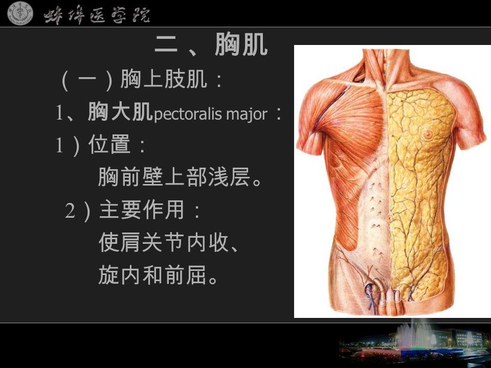 (一)胸上肢肌: 1 、胸大肌 pectoralis major : 1 )位置: 胸前壁上部浅层。 2 )主要作用: 使肩关节内收、 旋内和前屈。 二 、胸肌