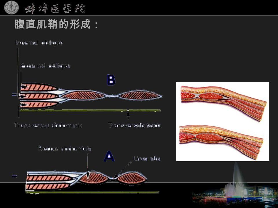 腹直肌鞘的形成: