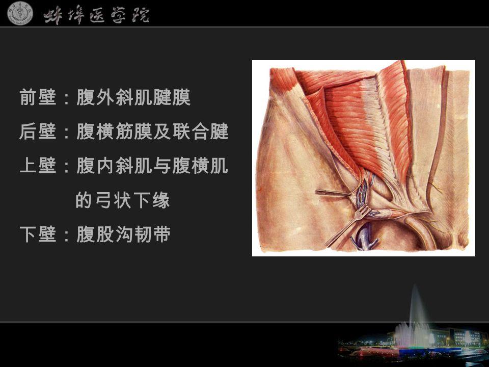 前壁:腹外斜肌腱膜 后壁:腹横筋膜及联合腱 上壁:腹内斜肌与腹横肌 的弓状下缘 下壁:腹股沟韧带