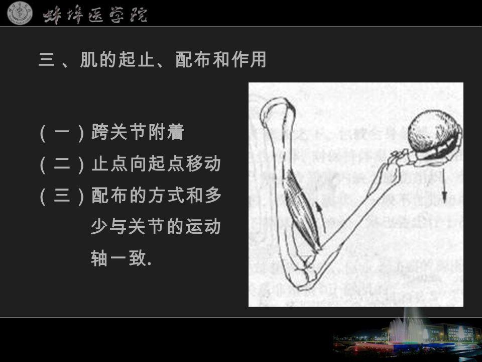 (一)跨关节附着 (二)止点向起点移动 (三)配布的方式和多 少与关节的运动 轴一致. 三 、肌的起止、配布和作用