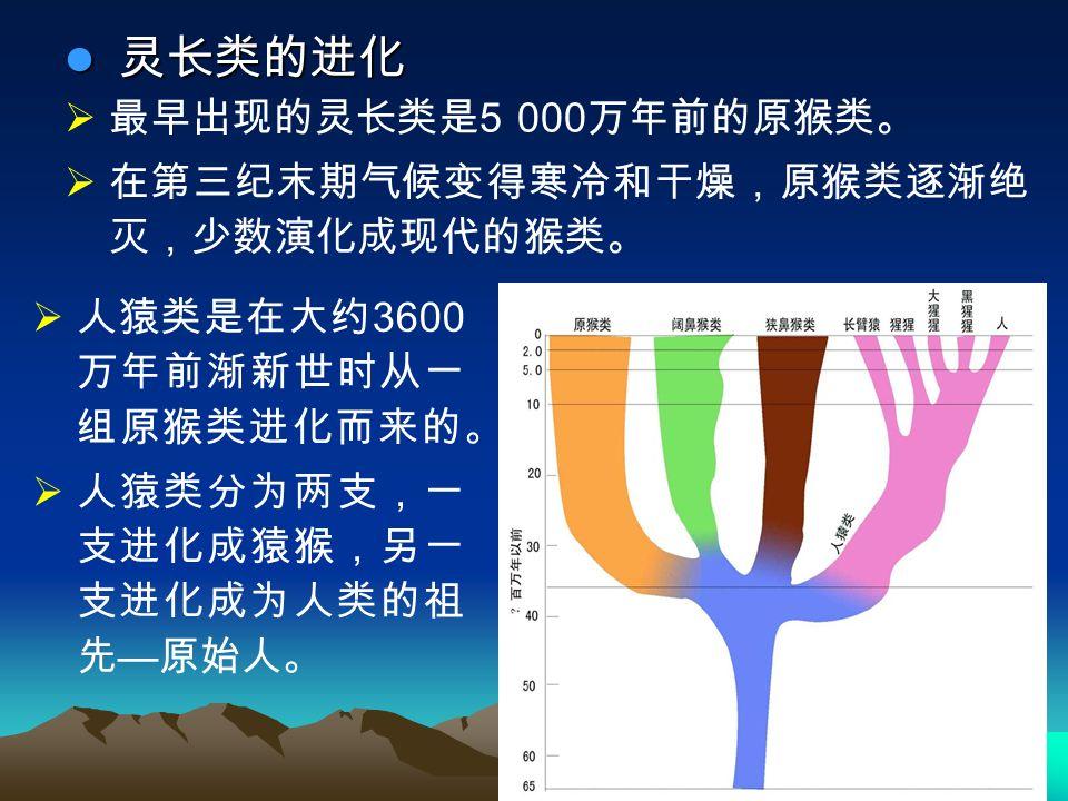  最早出现的灵长类是 5 000 万年前的原猴类。  在第三纪末期气候变得寒冷和干燥,原猴类逐渐绝 灭,少数演化成现代的猴类。 灵长类的进化 灵长类的进化  人猿类是在大约 3600 万年前渐新世时从一 组原猴类进化而来的。  人猿类分为两支,一 支进化成猿猴,另一 支进化成为人类的祖 先 — 原始人。