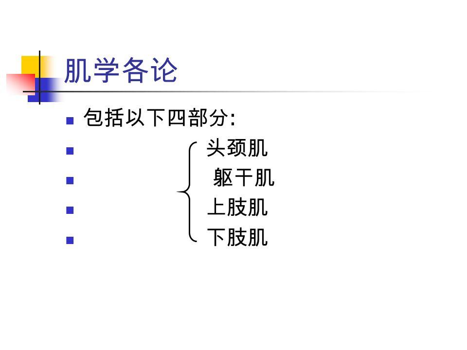 肌学各论 包括以下四部分 : 头颈肌 躯干肌 上肢肌 下肢肌