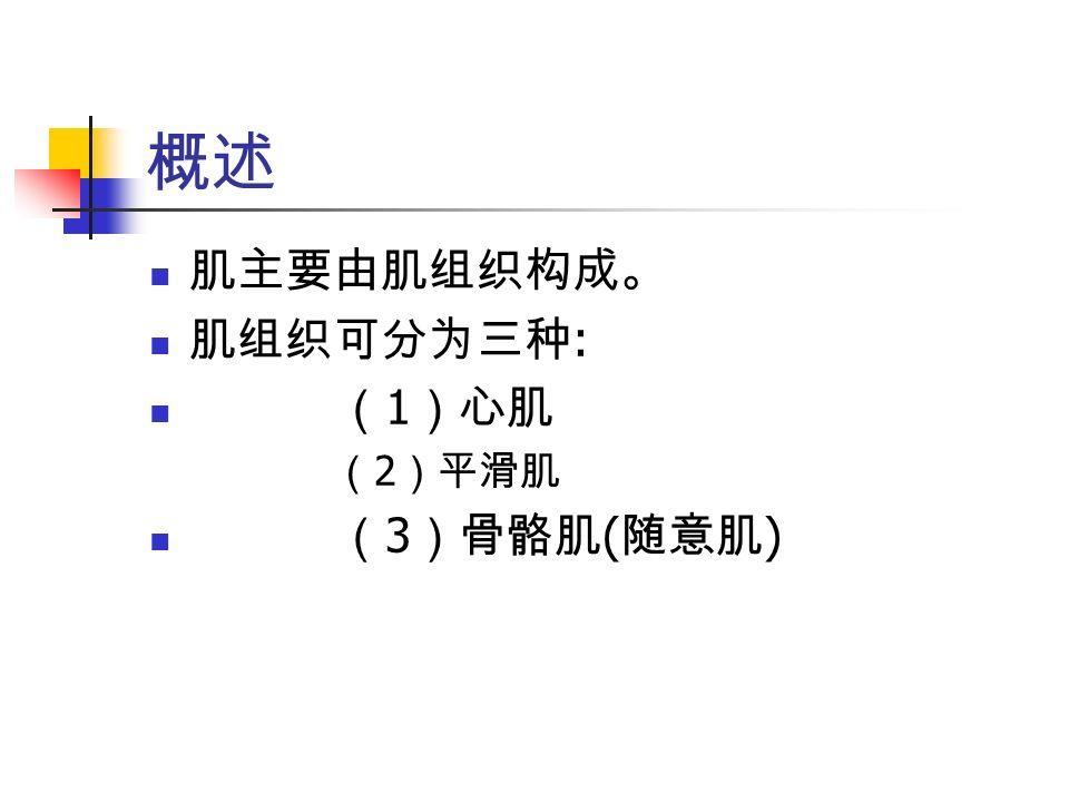 概述 肌主要由肌组织构成。 肌组织可分为三种 : ( 1 )心肌 ( 2 )平滑肌 ( 3 )骨骼肌 ( 随意肌 )