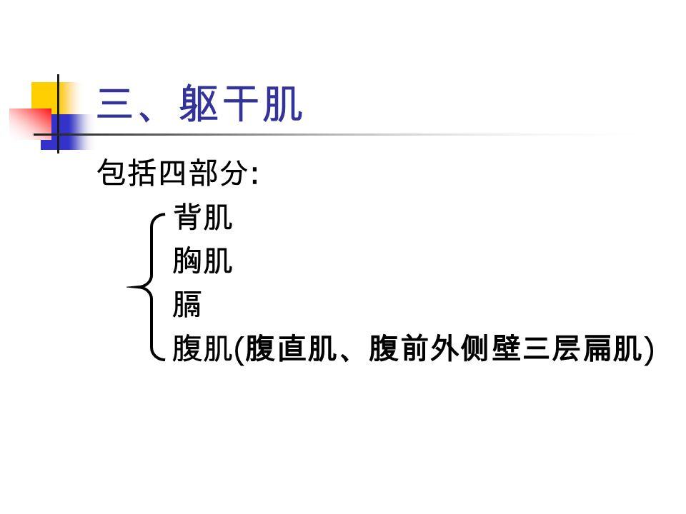三、躯干肌 包括四部分 : 背肌 胸肌 膈 腹肌 ( 腹直肌、腹前外侧壁三层扁肌 )
