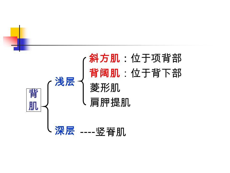 斜方肌:位于项背部 背阔肌:位于背下部 菱形肌 肩胛提肌 ---- 竖脊肌 背肌背肌 浅层 深层