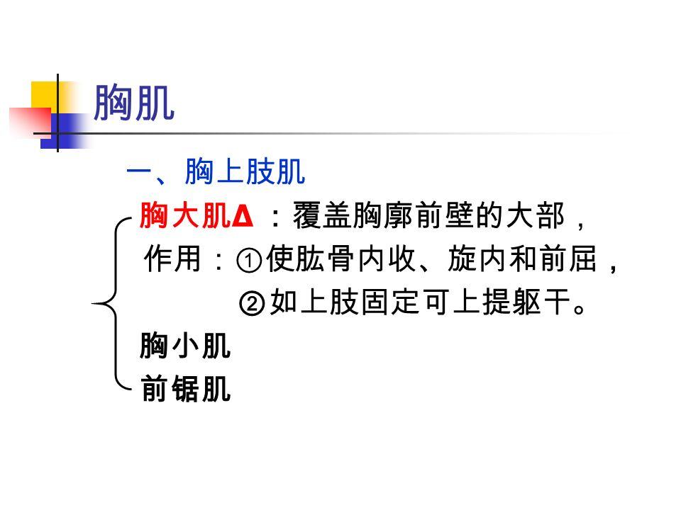 胸肌 一、胸上肢肌 胸大肌 Δ :覆盖胸廓前壁的大部, 作用:①使肱骨内收、旋内和前屈, ②如上肢固定可上提躯干。 胸小肌 前锯肌