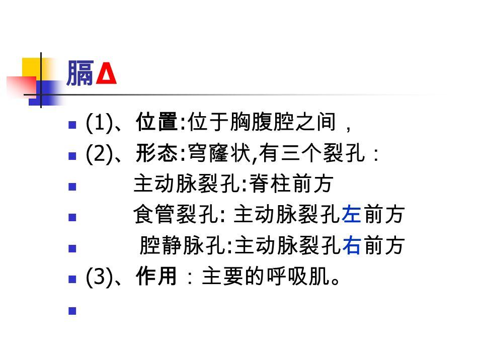 膈Δ膈Δ (1) 、位置 : 位于胸腹腔之间, (2) 、形态 : 穹窿状, 有三个裂孔: 主动脉裂孔 : 脊柱前方 食管裂孔 : 主动脉裂孔左前方 腔静脉孔 : 主动脉裂孔右前方 (3) 、作用:主要的呼吸肌。