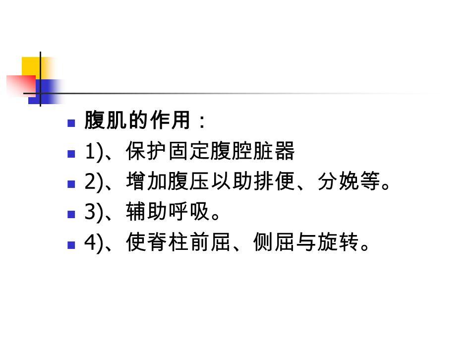 腹肌的作用: 1) 、保护固定腹腔脏器 2) 、增加腹压以助排便、分娩等。 3) 、辅助呼吸。 4) 、使脊柱前屈、侧屈与旋转。
