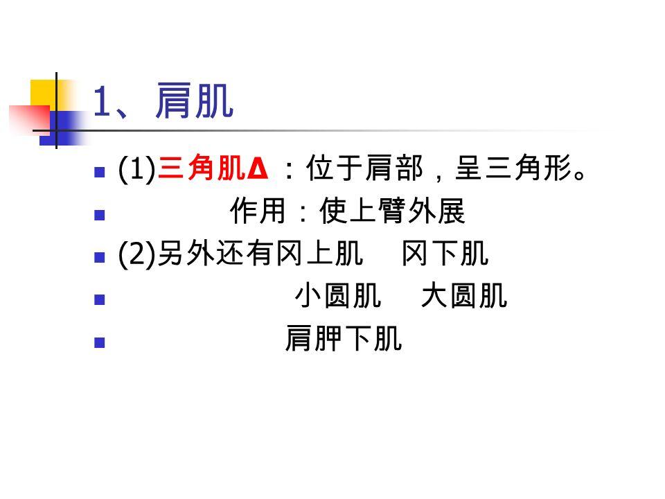 1 、肩肌 (1) 三角肌 Δ :位于肩部,呈三角形。 作用:使上臂外展 (2) 另外还有冈上肌 冈下肌 小圆肌 大圆肌 肩胛下肌
