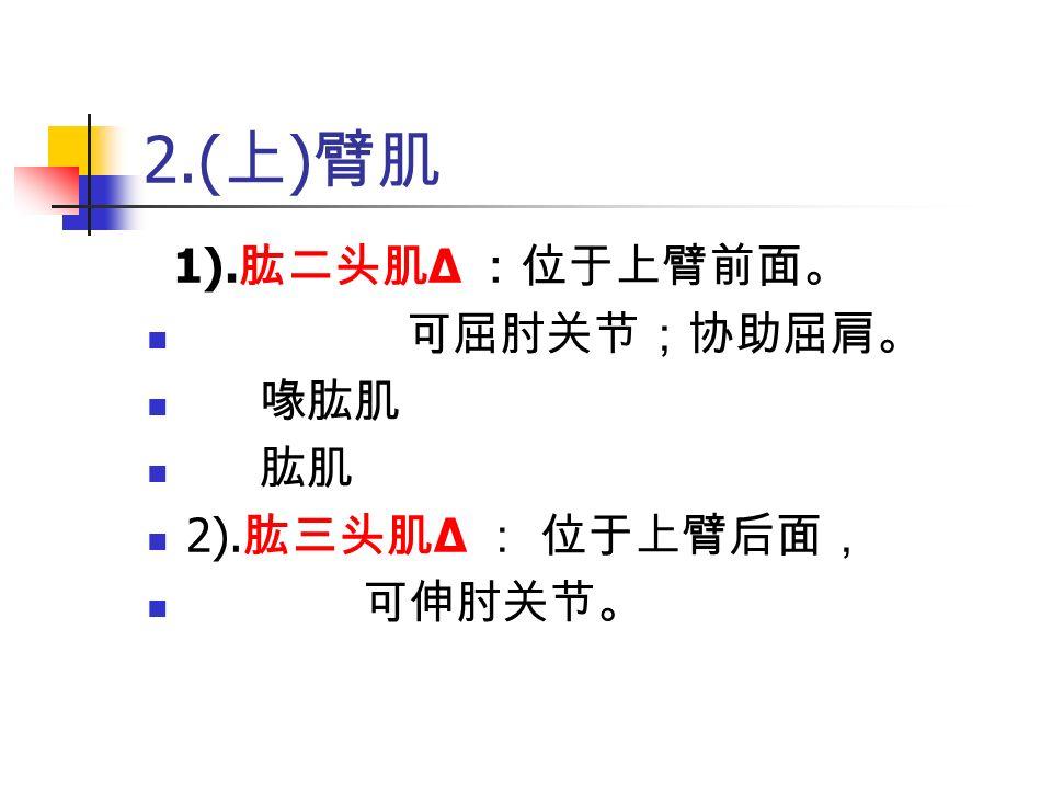 2.( 上 ) 臂肌 1). 肱二头肌 Δ :位于上臂前面。 可屈肘关节;协助屈肩。 喙肱肌 肱肌 2). 肱三头肌 Δ : 位于上臂后面, 可伸肘关节。