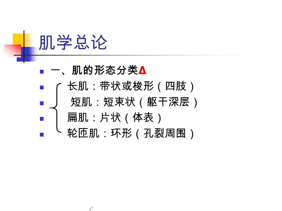 肌学总论 一、肌的形态分类 Δ 长肌:带状或梭形(四肢) 短肌:短束状(躯干深层) 扁肌:片状(体表) 轮匝肌:环形(孔裂周围)