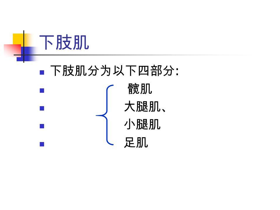 下肢肌 下肢肌分为以下四部分 : 髋肌 大腿肌、 小腿肌 足肌