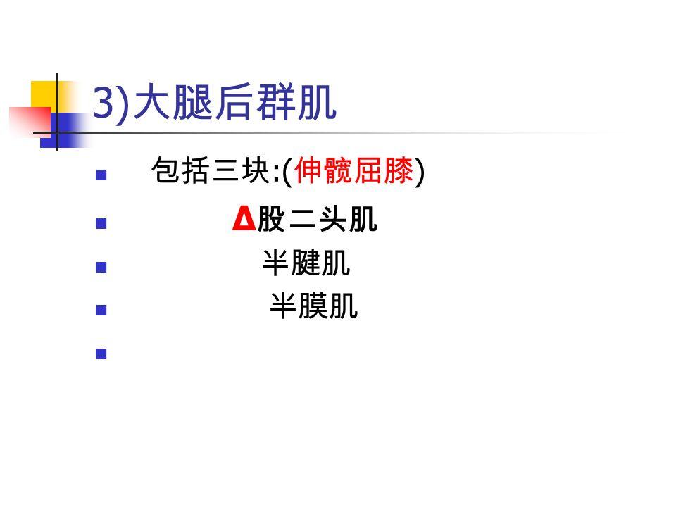 3) 大腿后群肌 包括三块 :( 伸髋屈膝 ) Δ 股二头肌 半腱肌 半膜肌