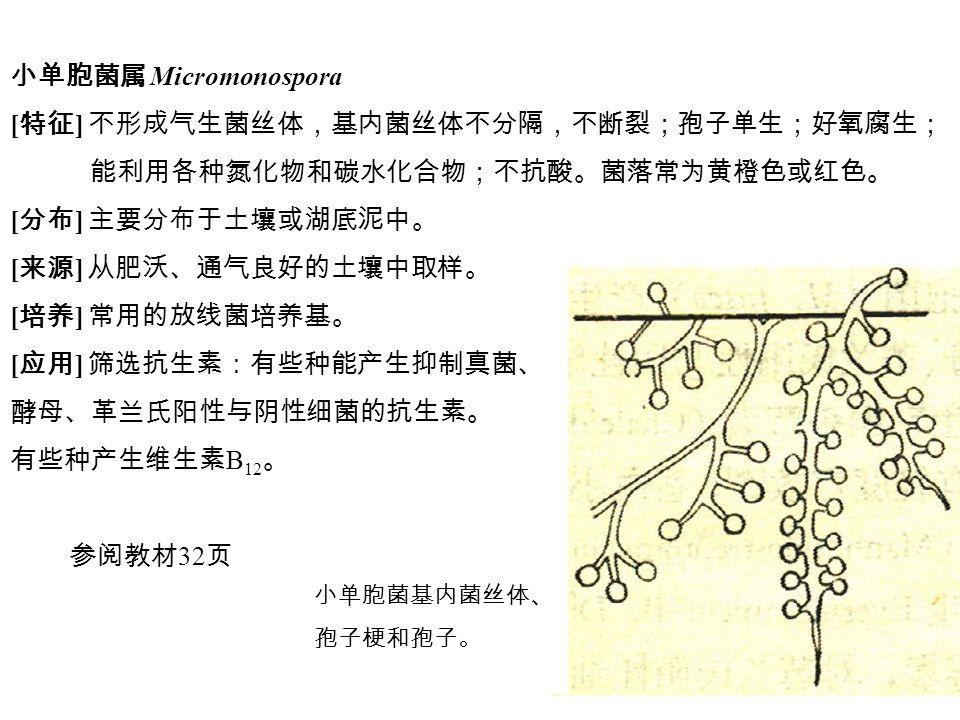 小单胞菌属 Micromonospora [ 特征 ] 不形成气生菌丝体,基内菌丝体不分隔,不断裂;孢子单生;好氧腐生; 能利用各种氮化物和碳水化合物;不抗酸。菌落常为黄橙色或红色。 [ 分布 ] 主要分布于土壤或湖底泥中。 [ 来源 ] 从肥沃、通气良好的土壤中取样。 [ 培养 ] 常用的放线菌培养基。 [ 应用 ] 筛选抗生素:有些种能产生抑制真菌、 酵母、革兰氏阳性与阴性细菌的抗生素。 有些种产生维生素 B 12 。 参阅教材 32 页 小单胞菌基内菌丝体、 孢子梗和孢子。