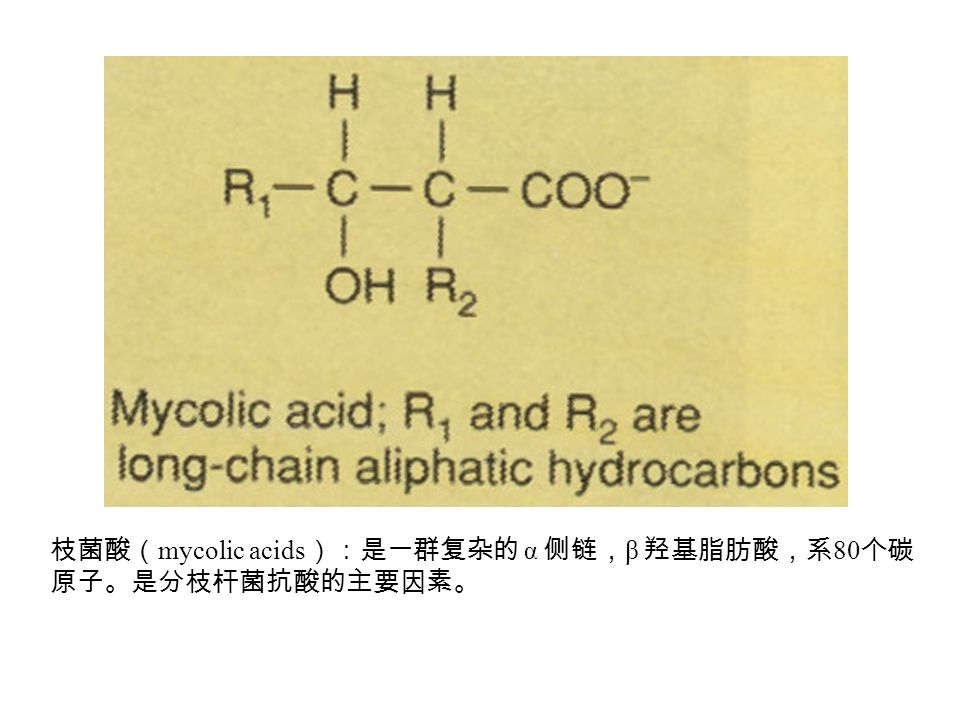 枝菌酸( mycolic acids ):是一群复杂的 α 侧链, β 羟基脂肪酸,系 80 个碳 原子。是分枝杆菌抗酸的主要因素。