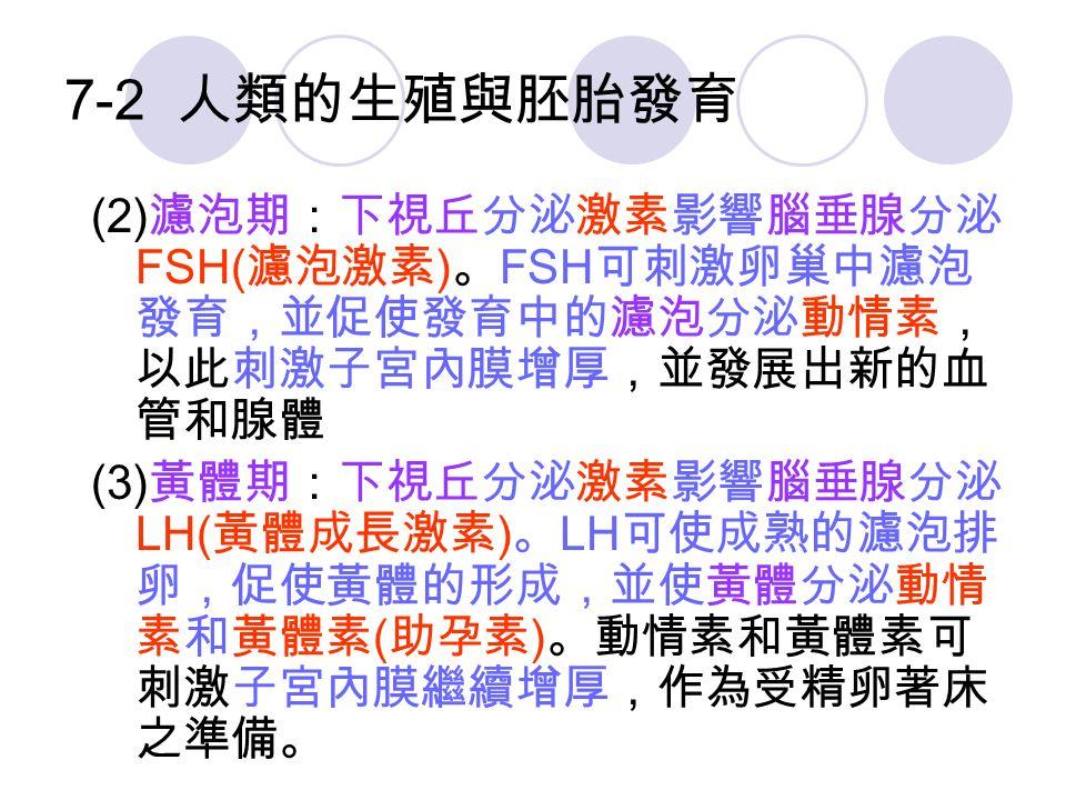 7-2 人類的生殖與胚胎發育 (2) 濾泡期:下視丘分泌激素影響腦垂腺分泌 FSH( 濾泡激素 ) 。 FSH 可刺激卵巢中濾泡 發育,並促使發育中的濾泡分泌動情素, 以此刺激子宮內膜增厚,並發展出新的血 管和腺體 (3) 黃體期:下視丘分泌激素影響腦垂腺分泌 LH( 黃體成長激素 ) 。 LH 可使成熟的濾泡排 卵,促使黃體的形成,並使黃體分泌動情 素和黃體素 ( 助孕素 ) 。動情素和黃體素可 刺激子宮內膜繼續增厚,作為受精卵著床 之準備。