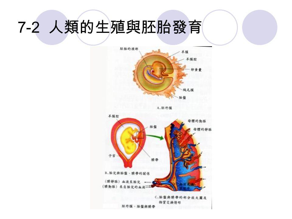 7-2 人類的生殖與胚胎發育