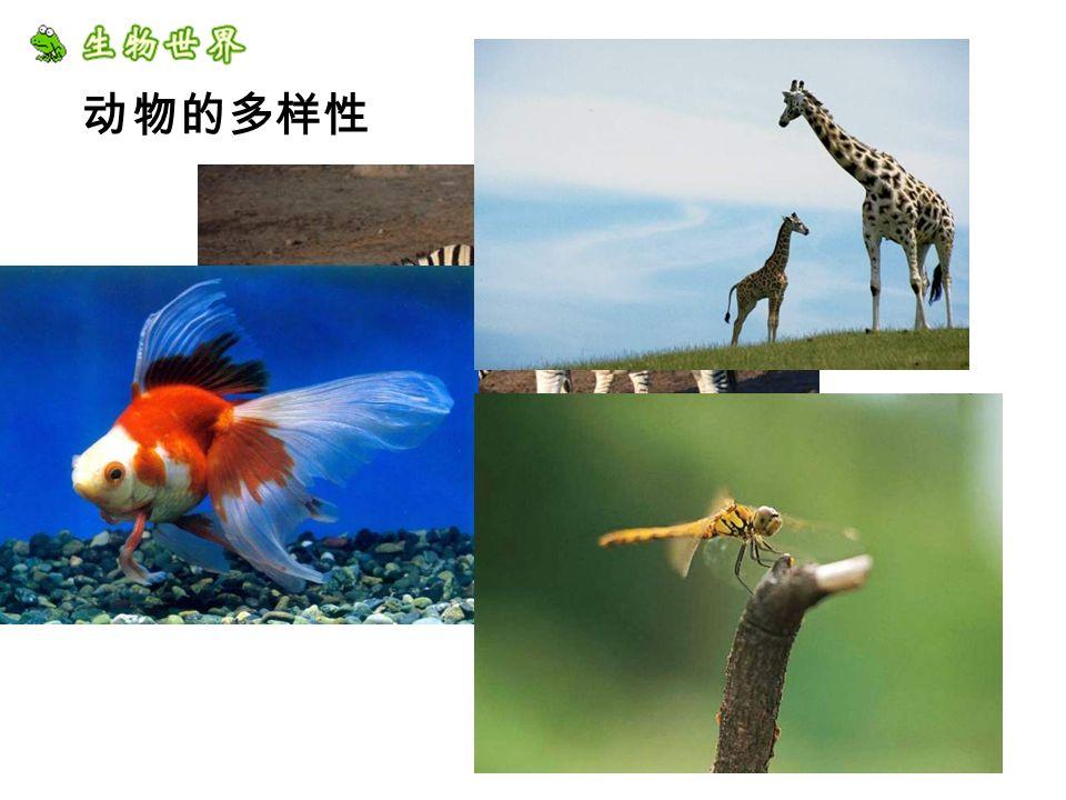 动物的多样性