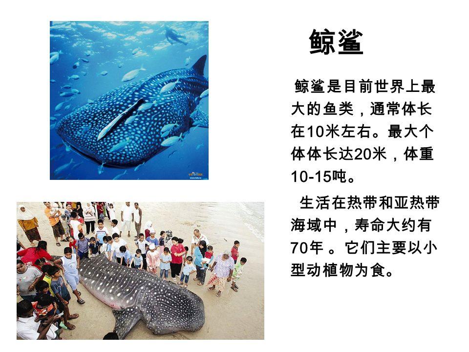 鲸鲨 鲸鲨是目前世界上最 大的鱼类,通常体长 在 10 米左右。最大个 体体长达 20 米,体重 10-15 吨。 生活在热带和亚热带 海域中,寿命大约有 70 年 。它们主要以小 型动植物为食。