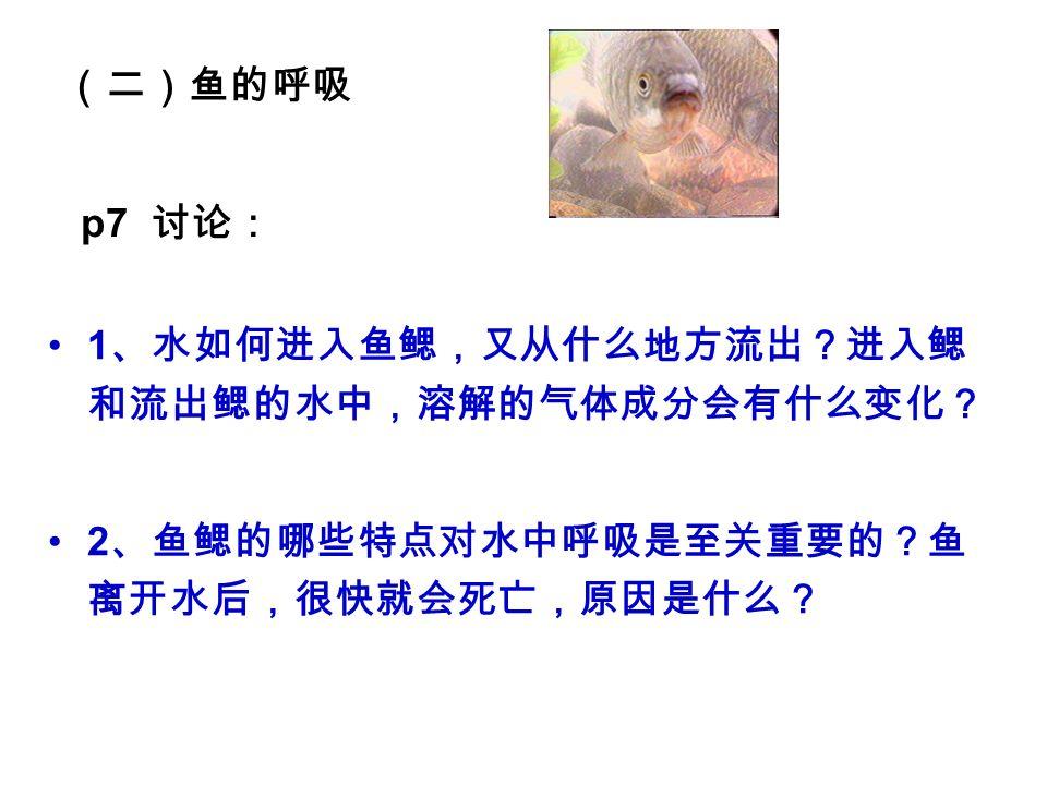 (二)鱼的呼吸 1 、水如何进入鱼鳃,又从什么地方流出?进入鳃 和流出鳃的水中,溶解的气体成分会有什么变化? 2 、鱼鳃的哪些特点对水中呼吸是至关重要的?鱼 离开水后,很快就会死亡,原因是什么? p7 讨论: