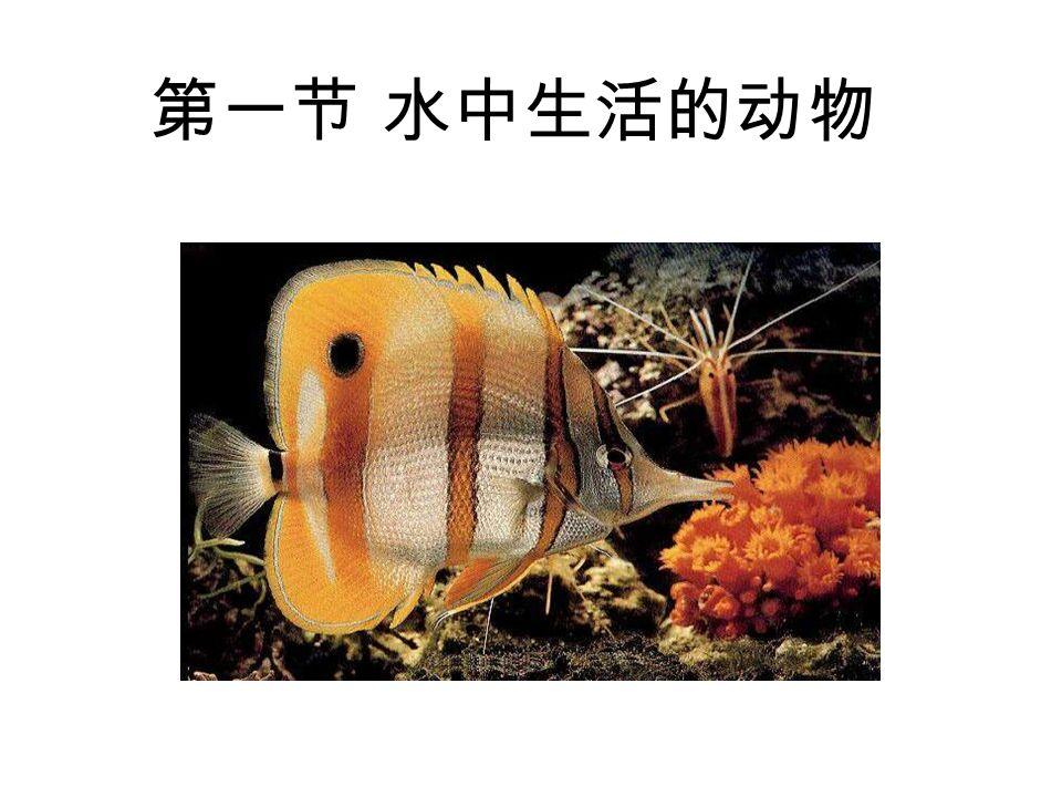 第一节 水中生活的动物