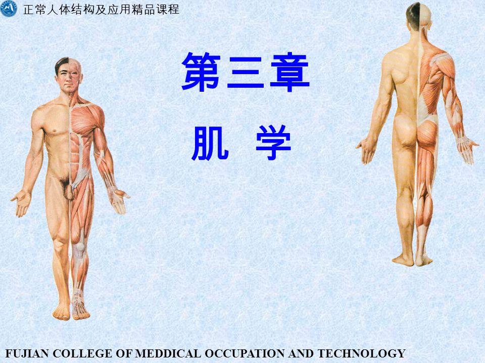 正常人体结构及应用精品课程 第三章 肌 学 FUJIAN COLLEGE OF MEDDICAL OCCUPATION AND TECHNOLOGY