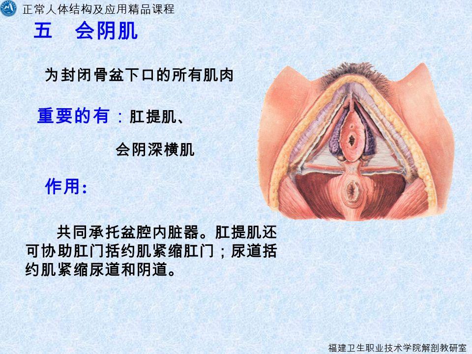 正常人体结构及应用精品课程 福建卫生职业技术学院解剖教研室 五 会阴肌 为封闭骨盆下口的所有肌肉 作用 : 重要的有: 肛提肌、 共同承托盆腔内脏器。肛提肌还 可协助肛门括约肌紧缩肛门;尿道括 约肌紧缩尿道和阴道。 会阴深横肌