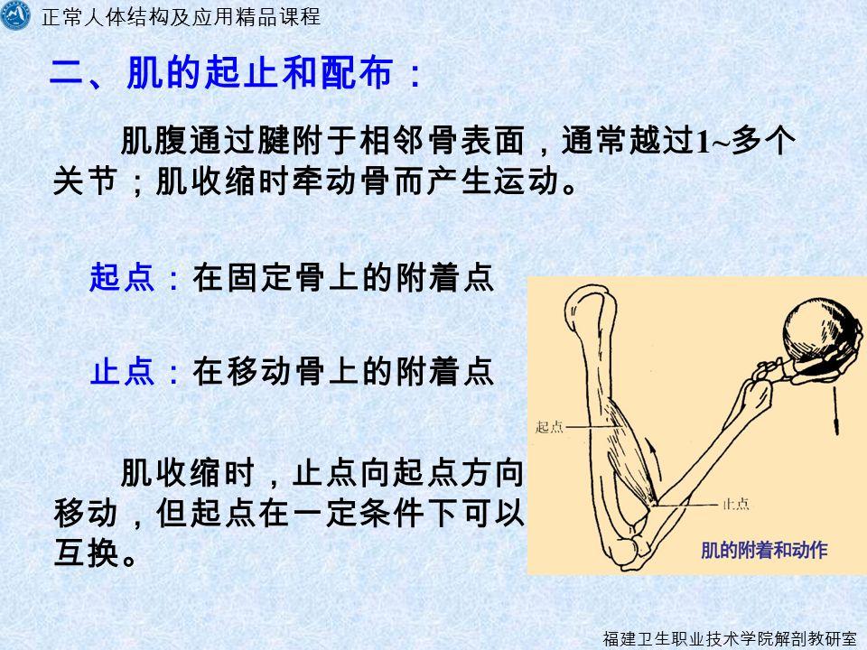 正常人体结构及应用精品课程 福建卫生职业技术学院解剖教研室 肌腹通过腱附于相邻骨表面,通常越过 1~ 多个 关节;肌收缩时牵动骨而产生运动。 二、肌的起止和配布: 起点:在固定骨上的附着点 止点:在移动骨上的附着点 肌收缩时,止点向起点方向 移动,但起点在一定条件下可以 互换。