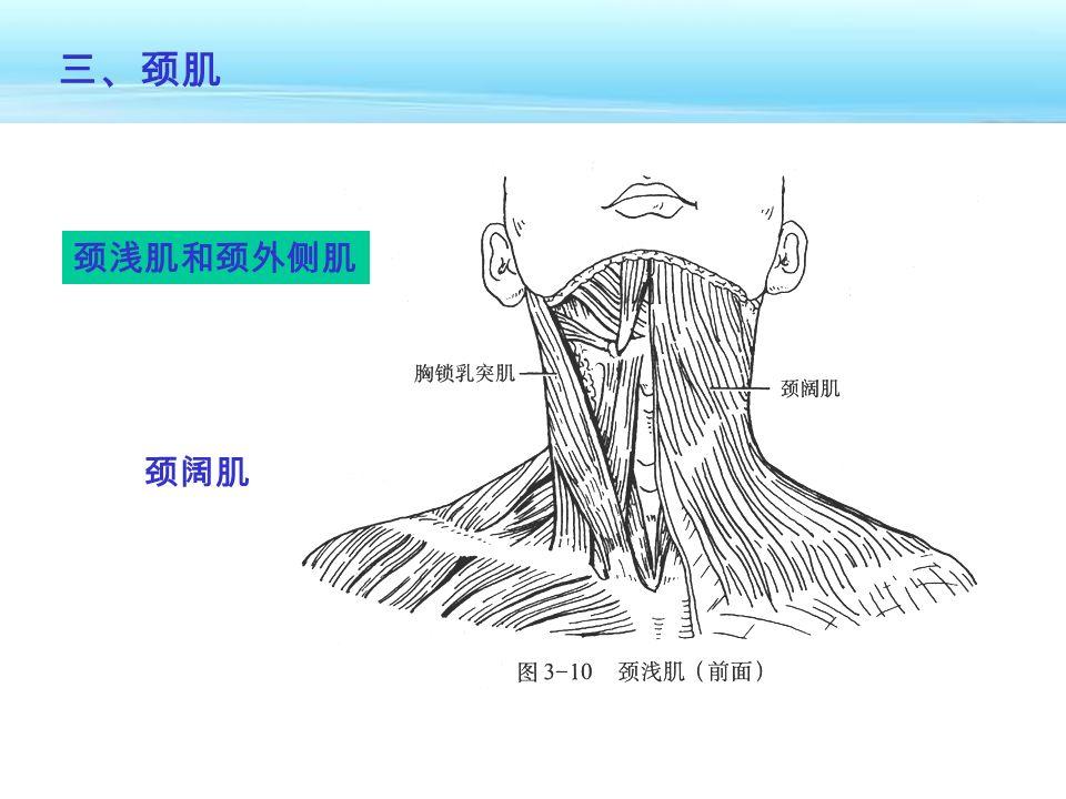 三、颈肌 颈浅肌和颈外侧肌 颈阔肌