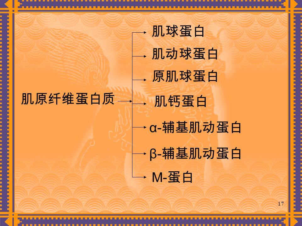 17 肌球蛋白 肌原纤维蛋白质 肌动球蛋白 原肌球蛋白 肌钙蛋白 α- 辅基肌动蛋白 β- 辅基肌动蛋白 M- 蛋白