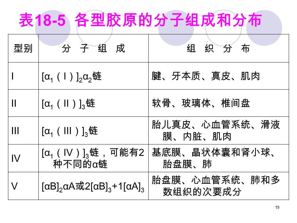 19 表 18-5 各型胶原的分子组成和分布 型别分 子 组 成组 织 分 布 I [α 1 ( I ) ] 2 α 2 链腱、牙本质、真皮、肌肉 Ⅱ [α 1 (Ⅱ) ] 3 链软骨、玻璃体、椎间盘 Ⅲ [α 1 (Ⅲ) ] 3 链 胎儿真皮、心血管系统、滑液 膜、内脏、肌肉 Ⅳ [α 1 (Ⅳ) ] 3 链,可能有 2 种不同的 α 链 基底膜、晶状体囊和肾小球、 胎盘膜、肺 Ⅴ [αB] 2 αA 或 2[αB] 3 +1[αA] 3 胎盘膜、心血管系统、肺和多 数组织的次要成分