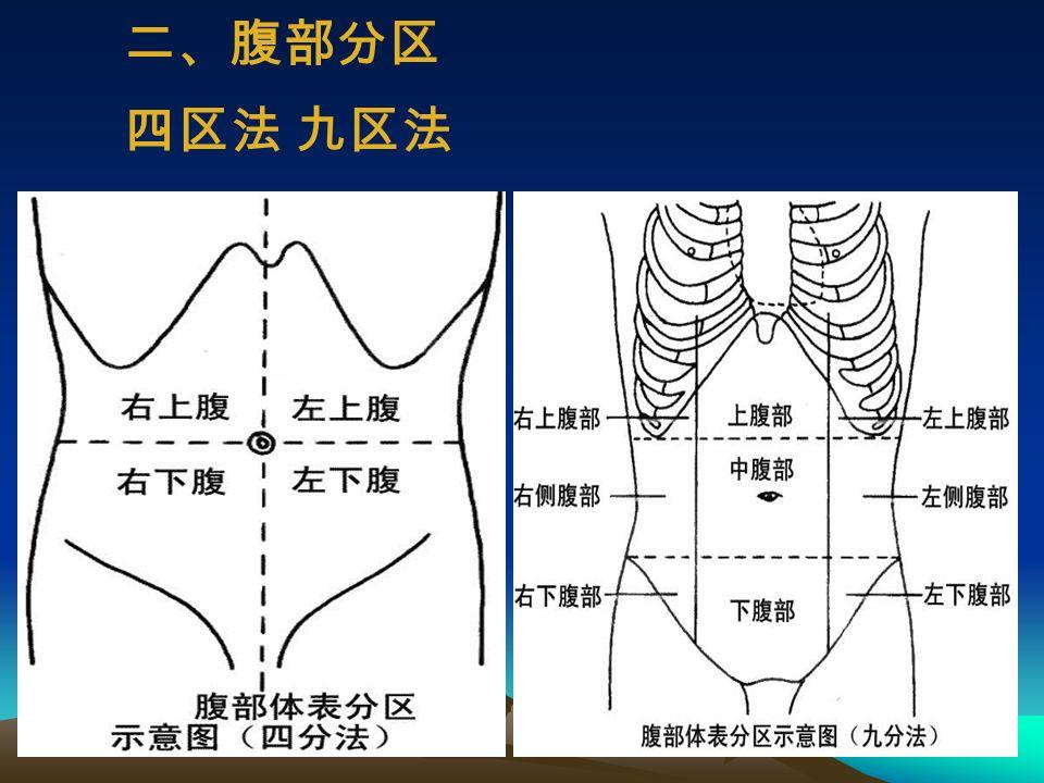 一、腹部体表标志