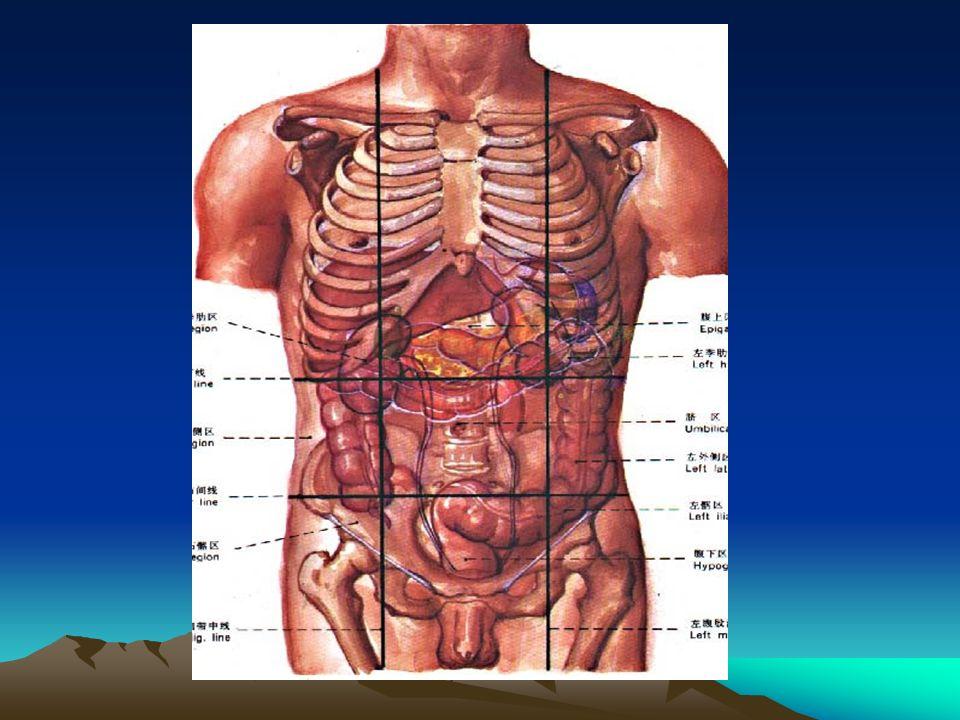 腹部主要脏器 右上腹 右下腹左下腹 左上腹 右侧腹左侧腹中腹部